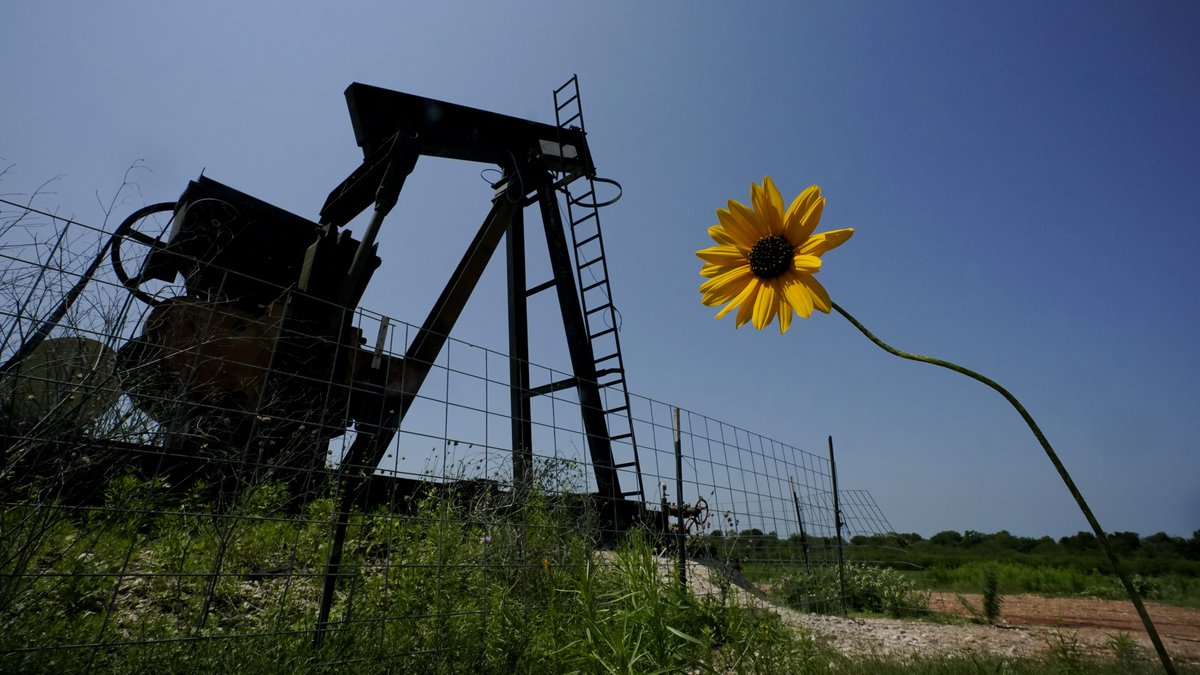 A wildflower blows in the wind near an old pump jack on Molly Rooke's ranch, Tuesday, May 18,...
