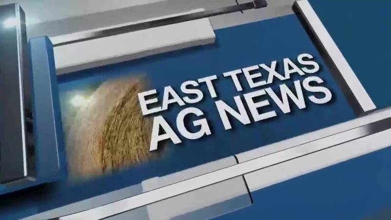 East Texas Ag News: Livestock Report