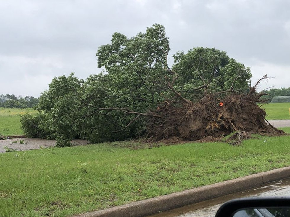 Pictured is a downed tree in Tyler's Lindsey Park. (Source: Joan Cole)