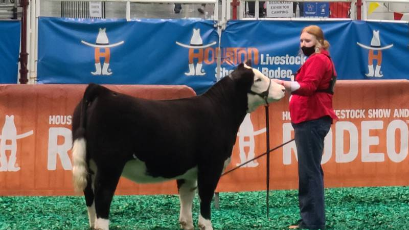 Hayley Eldridge, a senior at Central High School, will be showing her heifer Henny at the...