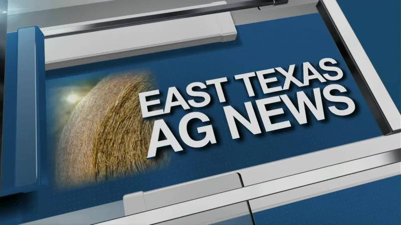 East Texas Ag News: Egg prices rising before the Easter Holiday