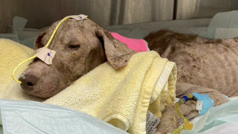 Lindy is being monitored by SPCA nipped Clinic staff