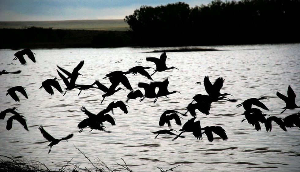 The Buffalo Lake Wildlife Refuge has been named as a prime place for winter bird watching....