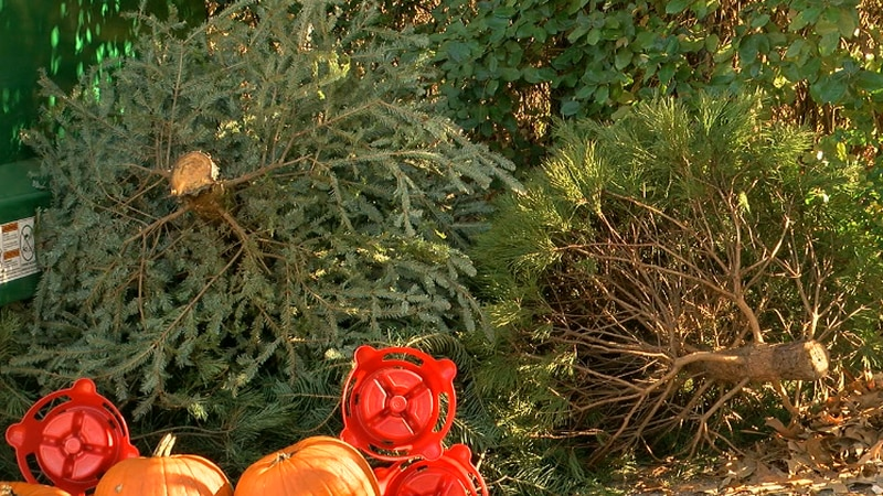Donated trees dropped off at gate 9.