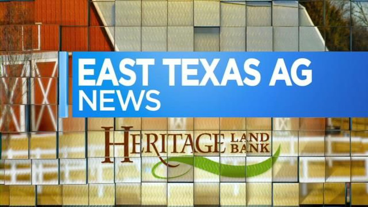 East Texas Ag News: Measuring bales of hay