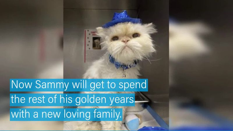 The cat arrived at the facility last week when his owner had to go into assisted living and...