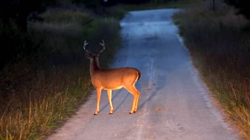 DGIF warns drivers of an increased risk of hitting deer during the fall months.