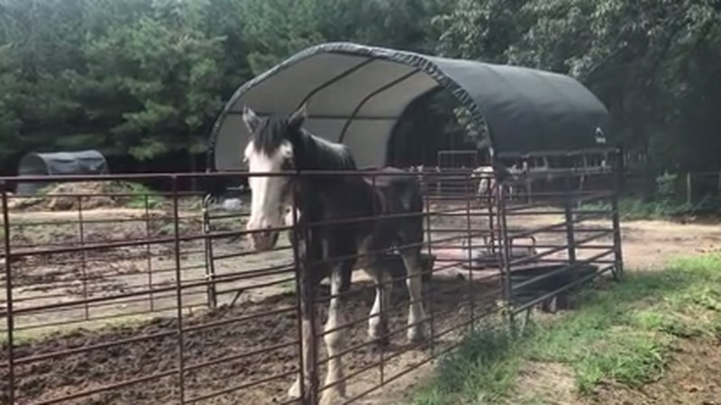 More than 150 horses are being seized Thursday during a raid in Camp County. (Source: KLTV, Bob...