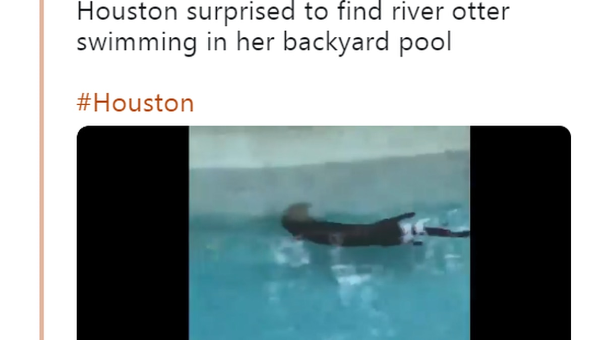 A Texas homeowner had a surprise encounter with an otter when she found it taking a dip in her...